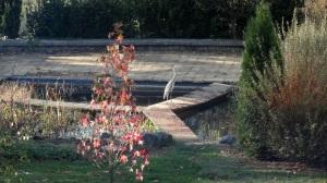 le heron du #manoir-des -forges